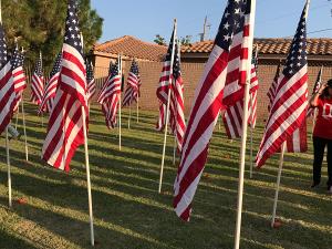 USA Flags at Memorial Park